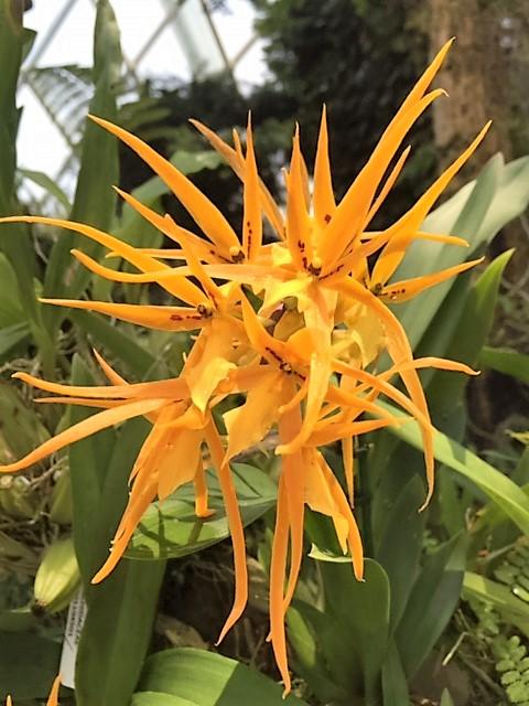 SIN fleur a